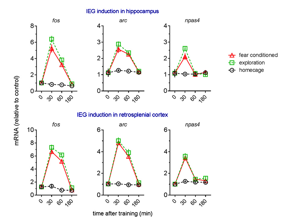 Figure 3: IEG response kinetics in hippocampus & RSC.
